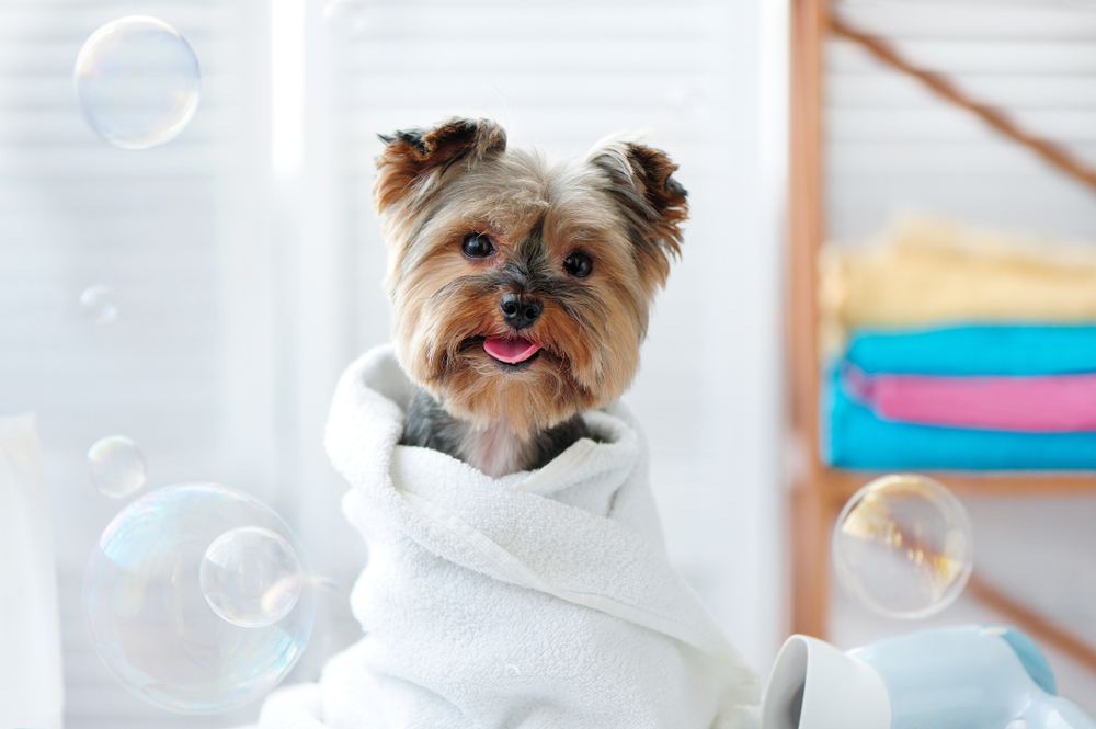 how often should you wash your dog rspca